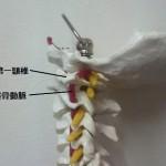 頸椎一番の状態