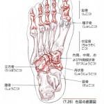 足の骨格1