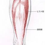 ヒラメ筋腱弓