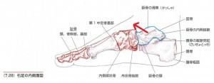 足首の歪みの原因になる距骨の歪み