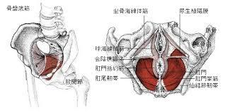 頻尿や失禁に対する骨盤底筋の治療